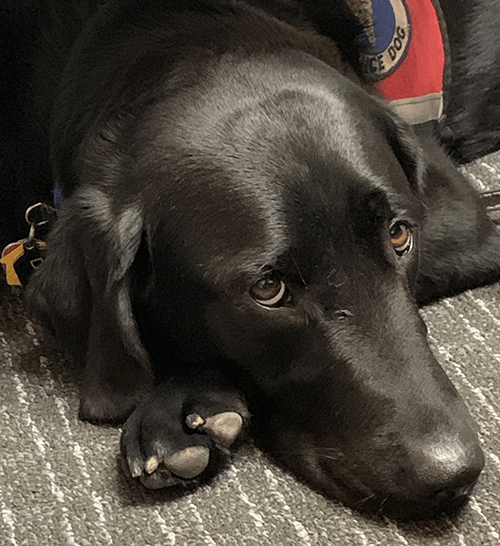 dale-c-dog-testimonial